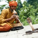 16220534 - charmer of snake in india