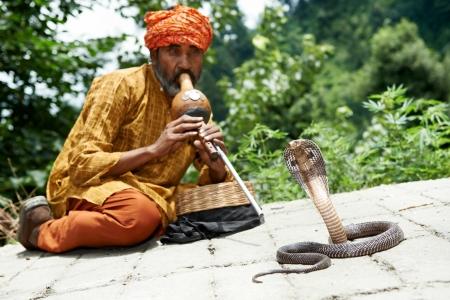 16220534 - charmer of snake in india